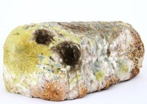molded bread